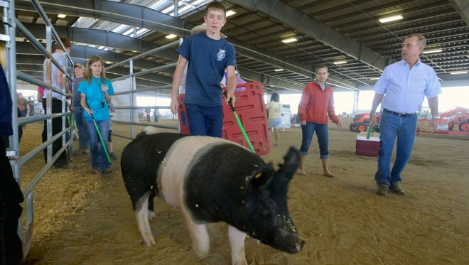A youth livestock show is set for Saturday at the 4-H Livestock Facility in Molino. Hogs, similar to Jimmy Dean who is being guided out of his pen by Austin Ashworth at last year's Santa Rosa County Fair, will be part of the show.