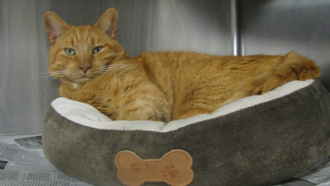 Warren wants to relax and bask in the love of his new family.