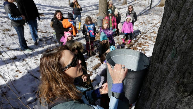Pam Uhlein, an educator at Riveredge Nature Center in Saukville, hangs a bucket to collect maple tree sap during a tour with Girl Scouts and 4-H groups in 2018.