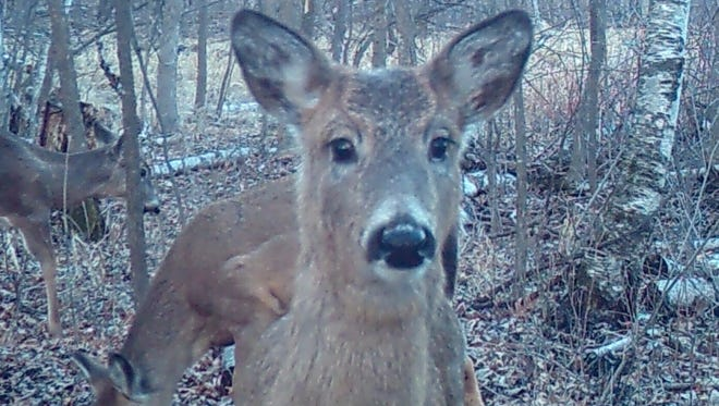 The popularity of trail cams will grow now that the wireless component is available.