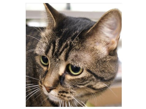 The Des Moines Register and the Animal Rescue League of Iowa are excited to introduce you to Tipper!