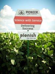 A field where DuPont Pioneer's Plenish oil grows. Plenish