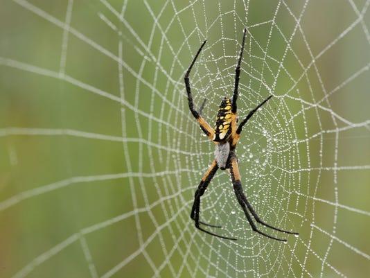 SNLBrd_08-21-2014_NewsLeader_1_C002~~2014~08~20~IMG_Yellow_Garden_Spider_1_1.jpg