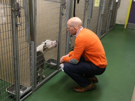 Chris Fitzgerald, director of animal services at the Verona St. Animal Shelter, visits with one of the dogs that is available for adoption. The shelter is approaching capacity after experiencing a holiday rush.