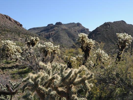 Alamo Canyon shows its rugged beauty along the Gila