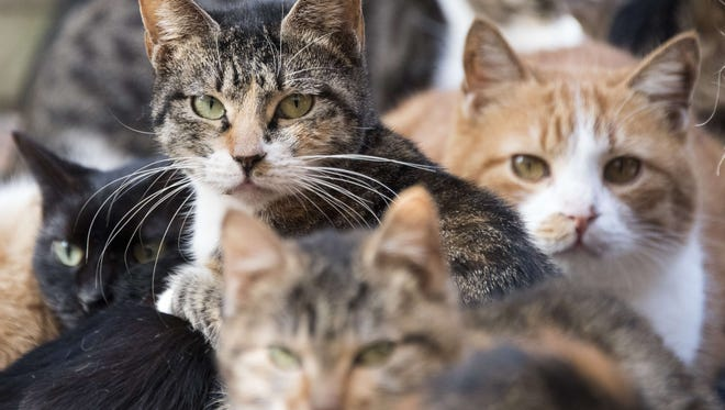 Authorities say Hatboro police received a call Friday about a strange odor coming from a home. They spoke to a man who said he lives in the loft space of the garage and kept the cats.
