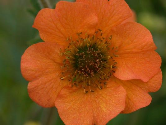 636511032799150459-totally-tangerine-closeup-geum-wg.jpg