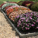 SunPatiens, such as this Henna, have brilliant colors and love full sun during the hottest parts of summer.