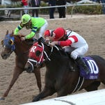 Kenneth L.& Sarah K. Ramsey's International Star wins the 43rd running of the Risen Star Stakes, (Gr II) at the Fair Grounds in New Orleans, LA Saturday, February 21, 2015. Miguel Mena was the winning jockey. Photo by Lou Hodges, Jr. / Hodges Photography