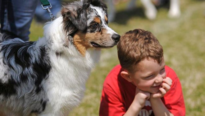 In this file photo Paul McCully and his dog, Sammy, watch the Fabulous Fido contest Saturday during the Bark to Remember at Community Maritime Park.