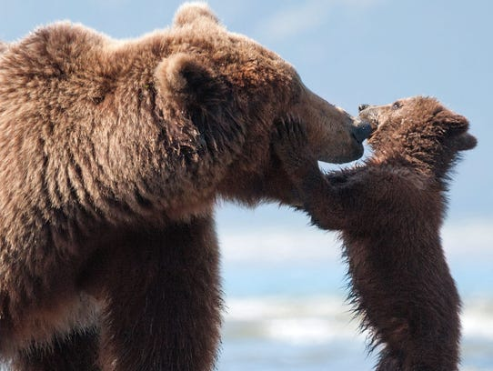 """Bears"""