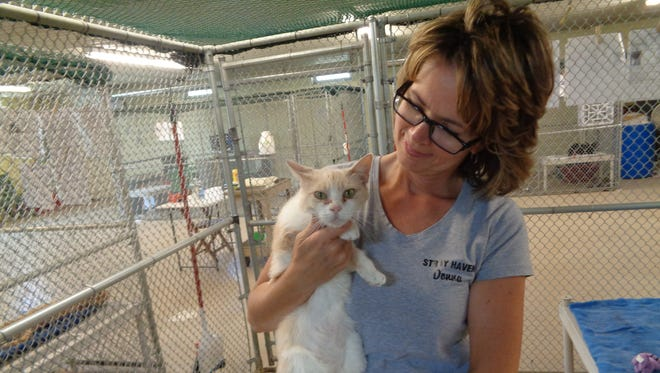 Donna Striley, the volunteer coordinator at Stray Haven Humane Society & SPCA, holds Little Lady, an orange tiger cat.