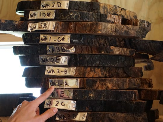 Inventoried tree slabs stored for future analysis (Photo by Brian Wiebler)