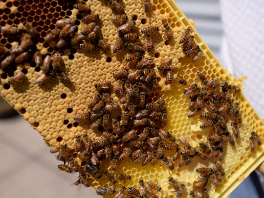Gabe Lopez shows a portion of one of his hives at his