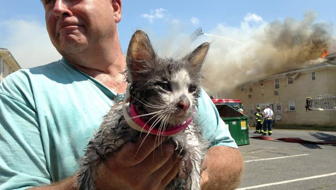 Michael Mautner, Eatontown, holds a soaked kitten who was rescued by firefighters working at the Twin Brooks Apartment complex fire in Ocean Township Tuesday, August 4, 2015.