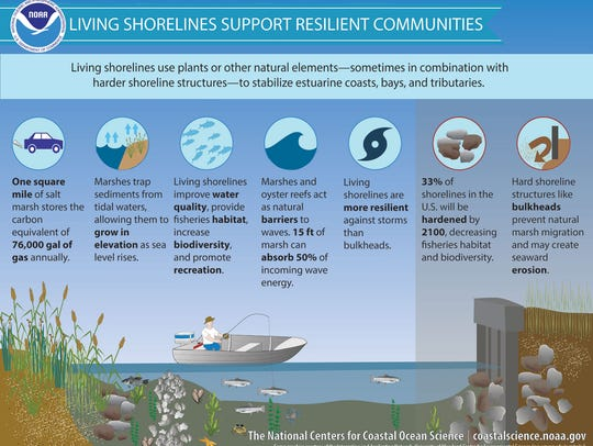 An explanation of living shorelines.