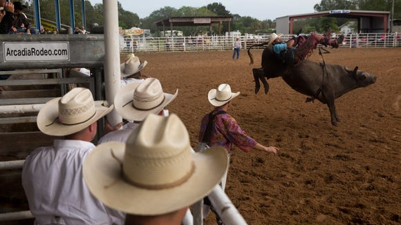Cowboys, cowgirls, and spectators flock to see the last day of the 4th Annual PRCA Fall Rodeo, the last professional event at the old rodeo arena in Arcadia, Fla., Sunday, October 22, 2017. Built in 1959, the arena has become a staple of the rodeo-centric town, and will be replaced by a new $7 million dollar venue, called the Mosaic Arena.