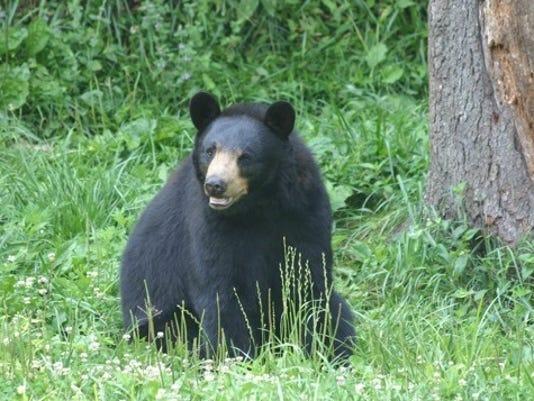 636025284188935947-ASHBrd-04-24-2016-ACT-1-A005--2016-04-23-IMG-Black-Bear-Tony-Dill-1-1-RNE5DIGR-L799347219-IMG-Black-Bear-Tony-Dill-1-1-RNE5DIGR.jpg