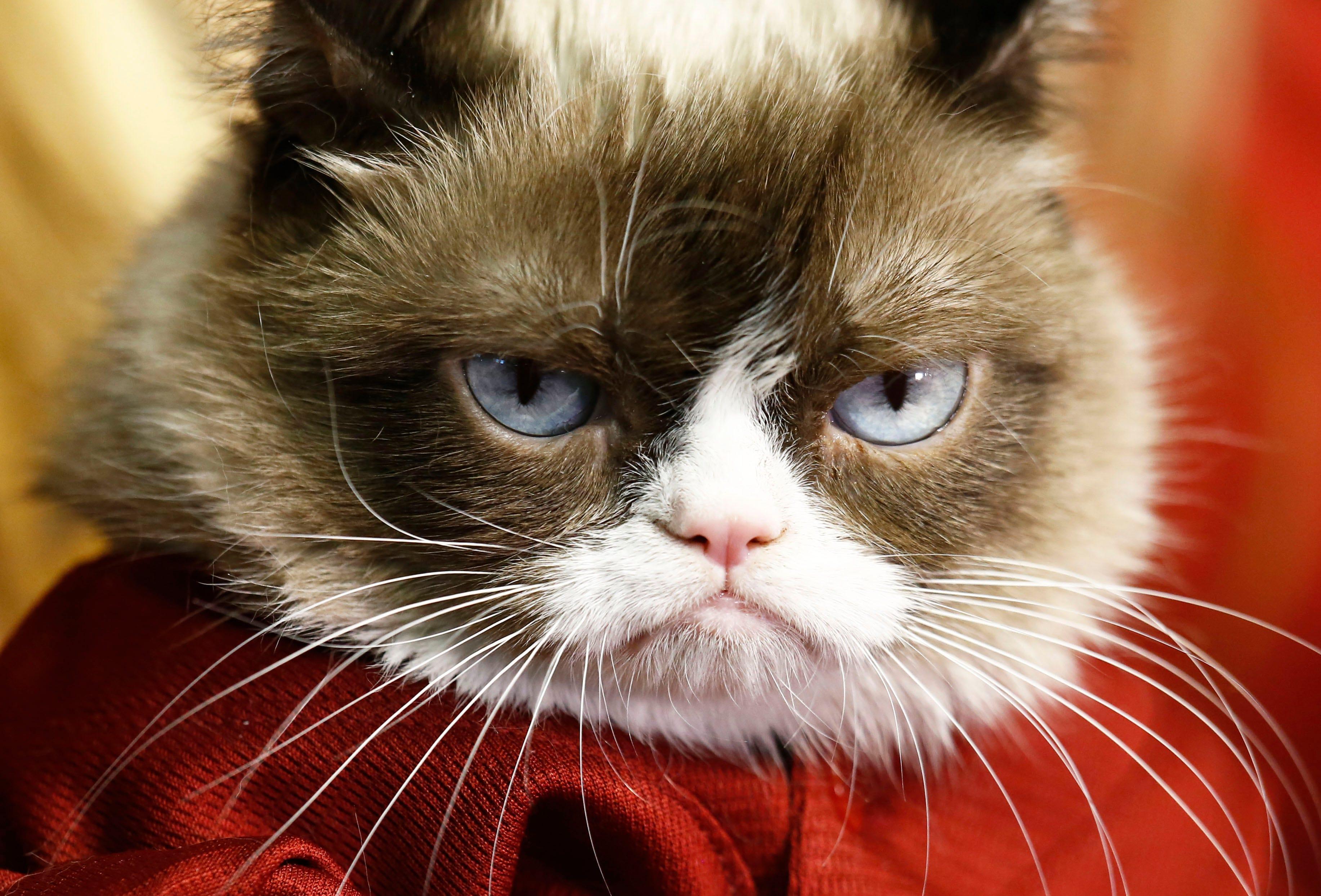 Grumpy Cat wins 710,000 in copyright lawsuit against Grenade Beverage pics