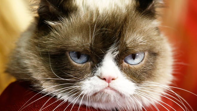 Grumpy Cat and her owners Crystal and Tabatha Bundesen tossed out the first pitch before the San Francisco Giants play the Arizona Diamondbacks on Monday, Sep. 7, 2015 at Chase Field in Phoenix, AZ.