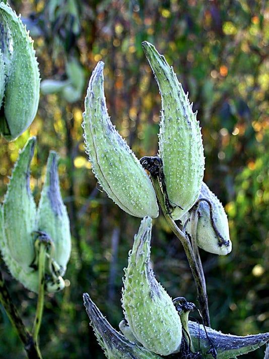NRO 2 Noxious plants.jpg