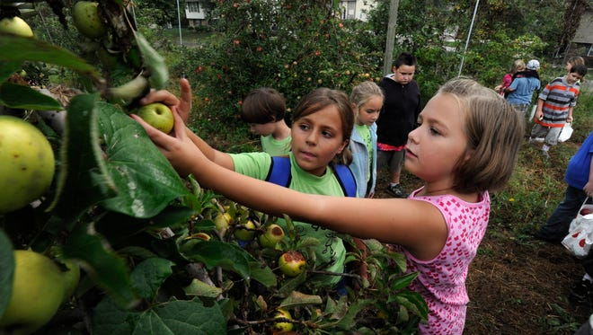 Third graders Hope Davis, center, and Natalie Breeden, right, from Middle Settlements Elementary and their classmates took their field trip to the Fruit and Berry Patch in Halls Wednesday, Sep. 22, 2010.