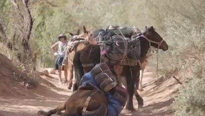Animal-welfare advocates have complained for years of mistreatment of animals delivering supplies to Havasupai.