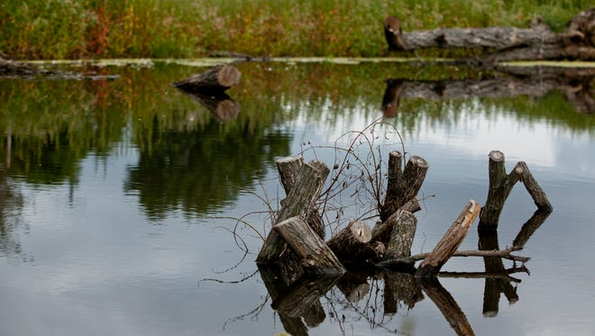 The Southeast Michigan Resilience Fund is focused on green stormwater infrastructure and habitat improvement.