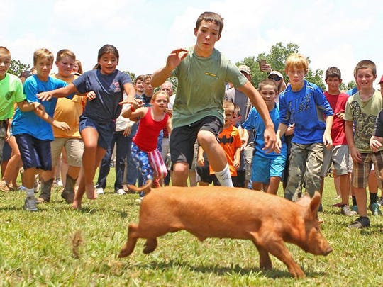 Children ages 10-18 years old chase after piglet Hogzilla during the greased pig contest at Hillbilly Day in Mountain Rest. The small and fast piglet eluded the circle of children and ran into the crowd, where judges said it was fair game for anyone else to catch her. Greg Nichols, 26, did that and before an audience at the main stage renamed her Porkchop.