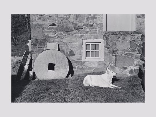 "Victoria Wyeth's photograph of her grandfather Andrew Wyeth's dog Nome is part of her photography exhibit ""My Andy"" at Greenville County Museum of Art."