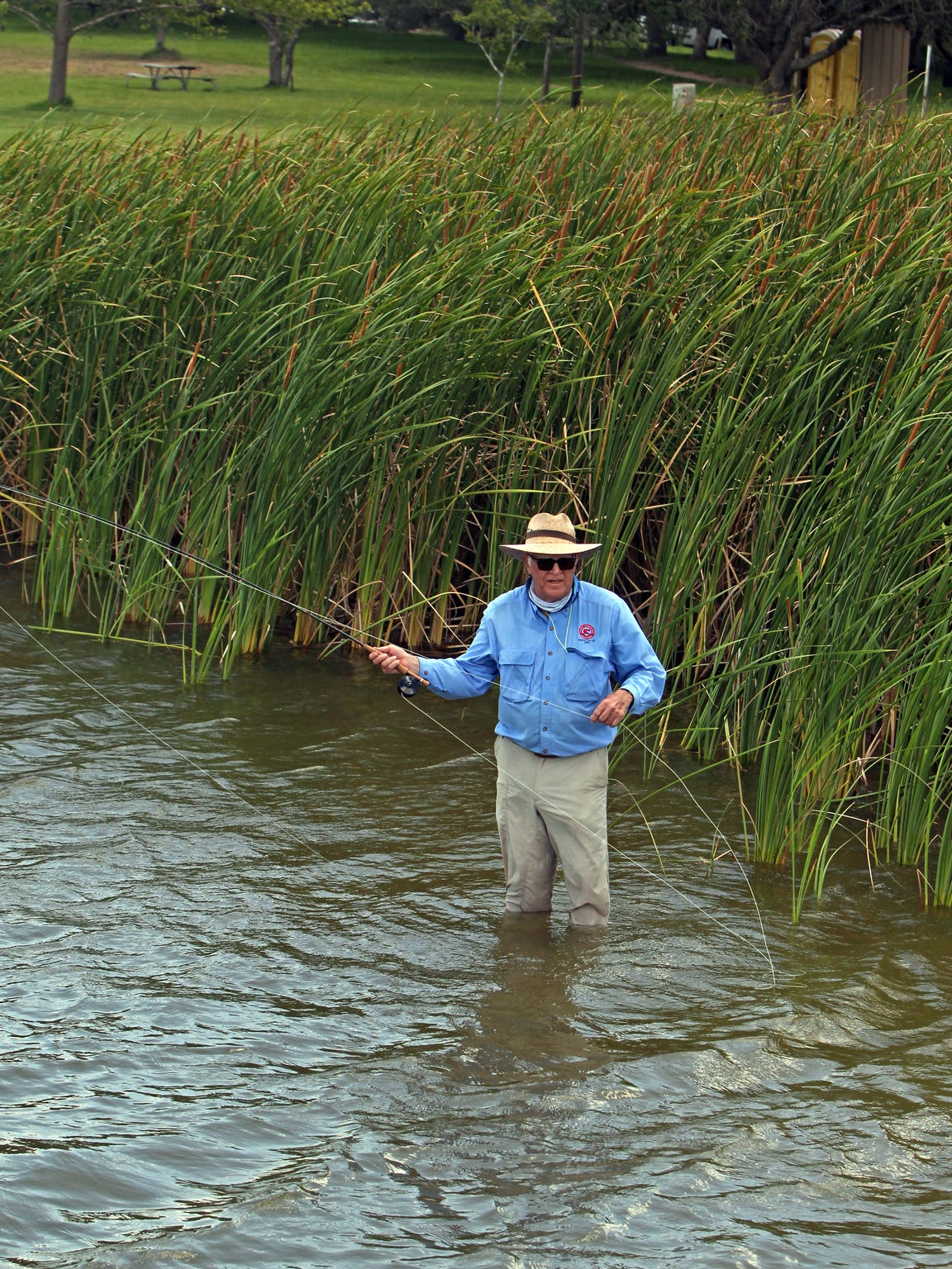 Cattails offer good cover for panfish along banks.
