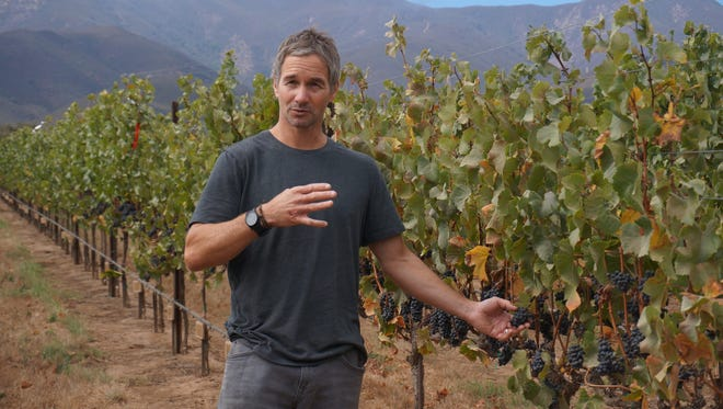 Paul Clifton, Director of winemaking at Hahn Family Wines, inspects the vines before harvest