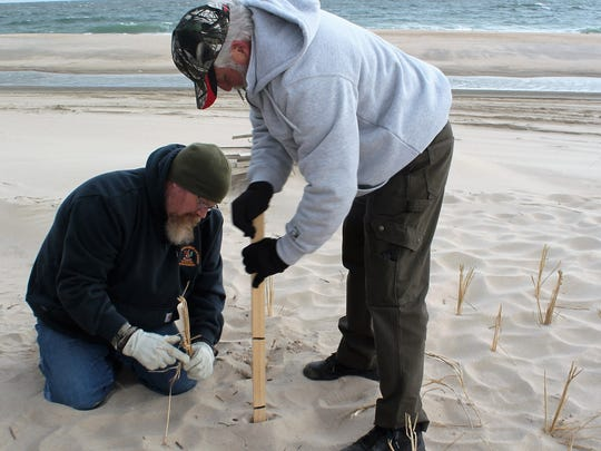 Sean Gooden, of Milton, (Left) and Bill Gibbons, of Dagsboro, (right) where part of a group of 40 volunteers from The Southern Delaware Jeep Club who helped plant Cape American Beach grass during Saturday's 27th Annual Beach Grass Planting organized by DNREC.