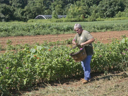 Bob Laurino, owner of Laurino Farms in Colts Neck, works on the farm—August 3, 2016 -Colts Neck, NJ.-Staff photographer/Bob Bielk/Gannett NJ