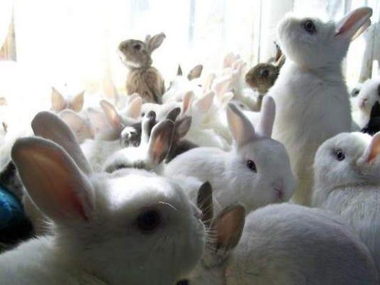 FTC0820-gg-rabbits lady.jpg