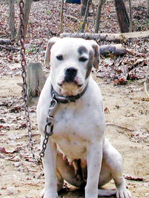 Wichita Falls dog-tethering ordinance stays in effect despite Gov. Greg Abbott's veto of a state tethering law.