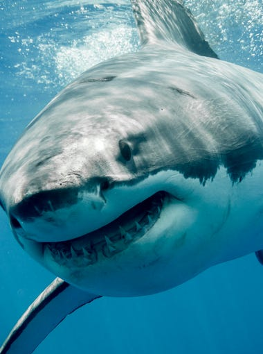 "In a plot lifted directly from the inevitable ""Sharknado 5: Fifths of Fury,"" plus or minus a few former ""90210"" actors simultaneously crushed and consumed by freefalling superpredators, a 6-year-old boy off the coast of Massachusetts this week caught a great white shark."