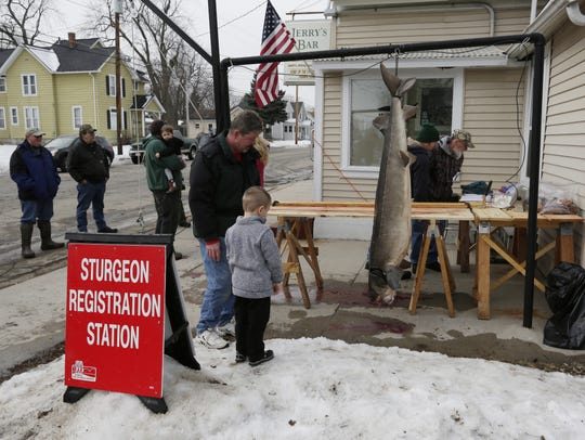 Mason Krueger registers his 146-pound, 73-inch sturgeon at Jerry's Bar in Oshkosh in this 2017 file photo.