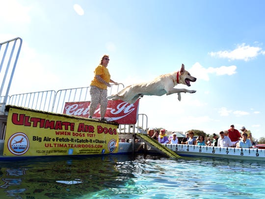 Kathleen Kalwa, of Boston Lake, New York, watches as Trey, a Labrador, leaps into a pool Jan. 21, 2017, during the Ultimate Air Dogs competition at the Humane Society's fifth annual Bark in the Park at Riverside Park in Vero Beach.