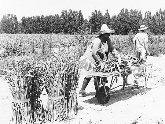 Gladious farms covered thousands of Lee County acres and employed hundreds of people in packinghouses and in the fields.