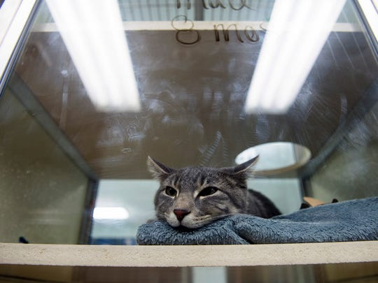 Eight-month-old Pluto lays in his bed Friday at the Camden County Animal Shelter in Gloucester Township.