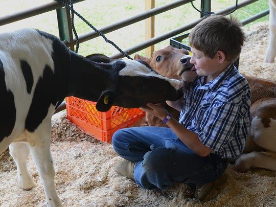Andrew Kargula, 10, receives a kiss from his three-month-old dairy cow, Brownie.