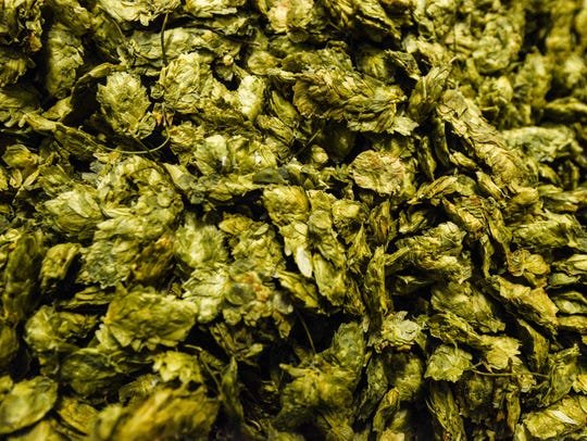 A pile of dried Simcoe hops.