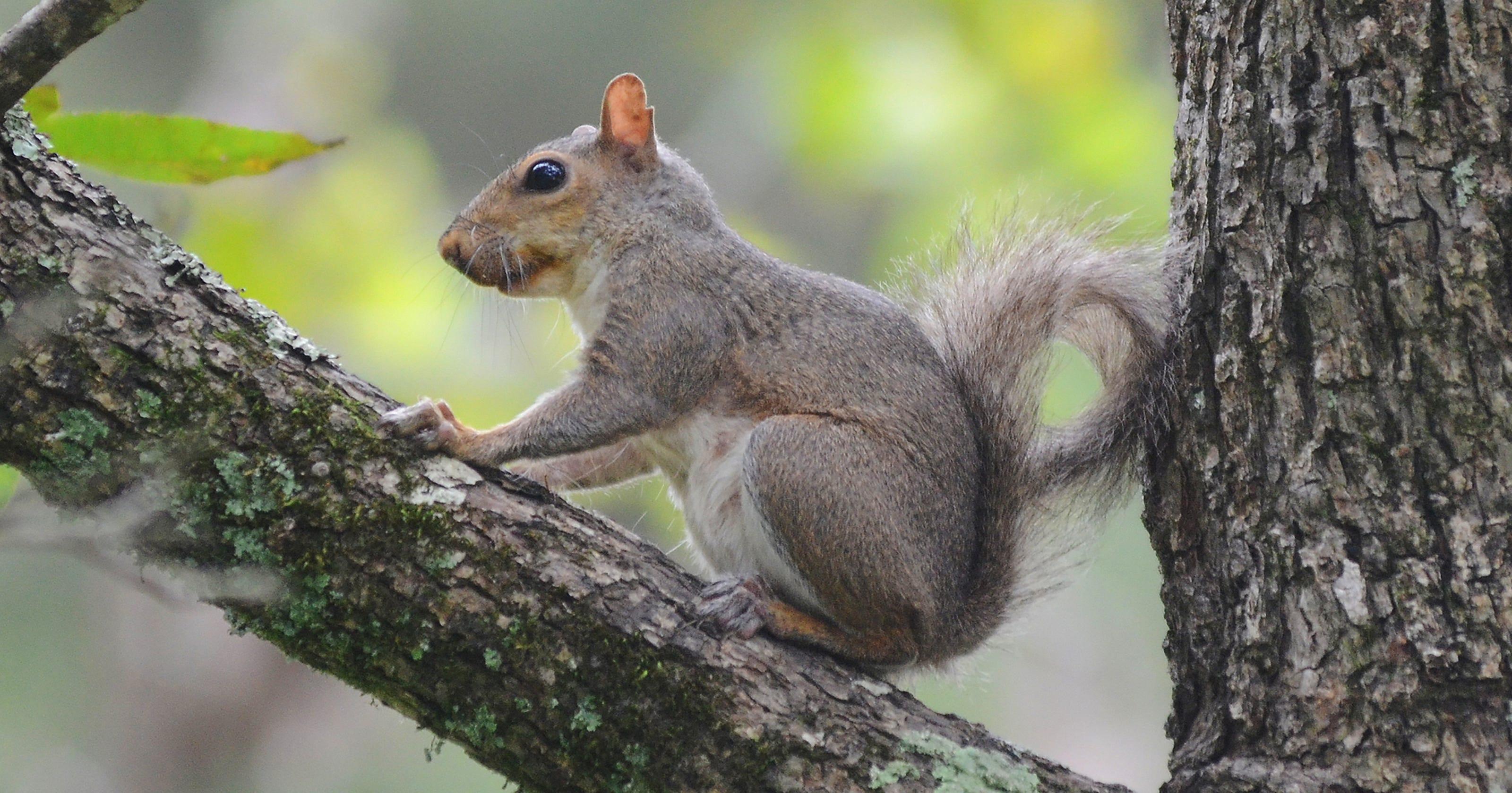 squirrel dating site