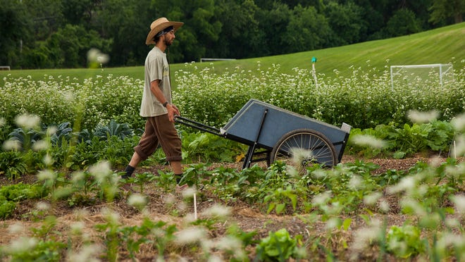 Ben Samuelson, who is on a fellowship with the Allegheny Mountain School, pushes a wheelbarrow between rows of crops he tends at the Virginia School for the Deaf and the Blind in Staunton on Monday.