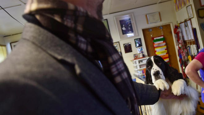 Neal Henderson, from Dover, shows off his 2-year-old English Springer Spaniel, Mr. Carson. Henderson co-owns Mr. Carson with Deb Kirk, from York. The pair will be showing Mr. Carson at the Westminster Dog Show on Feb. 13, 2018.