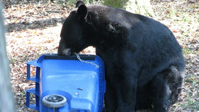A bear investigates a trash can. Santa Rosa County received one of 12 grants from the state to reduce human-bear conflicts. Santa Rosa will purchase 2,400 bear-resistant trash cans with the grant to help deter bears looking for food from interacting with people.