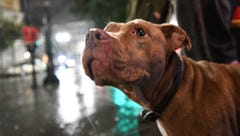Two people, 100+ animals escape flooded North Carolina animal shelter