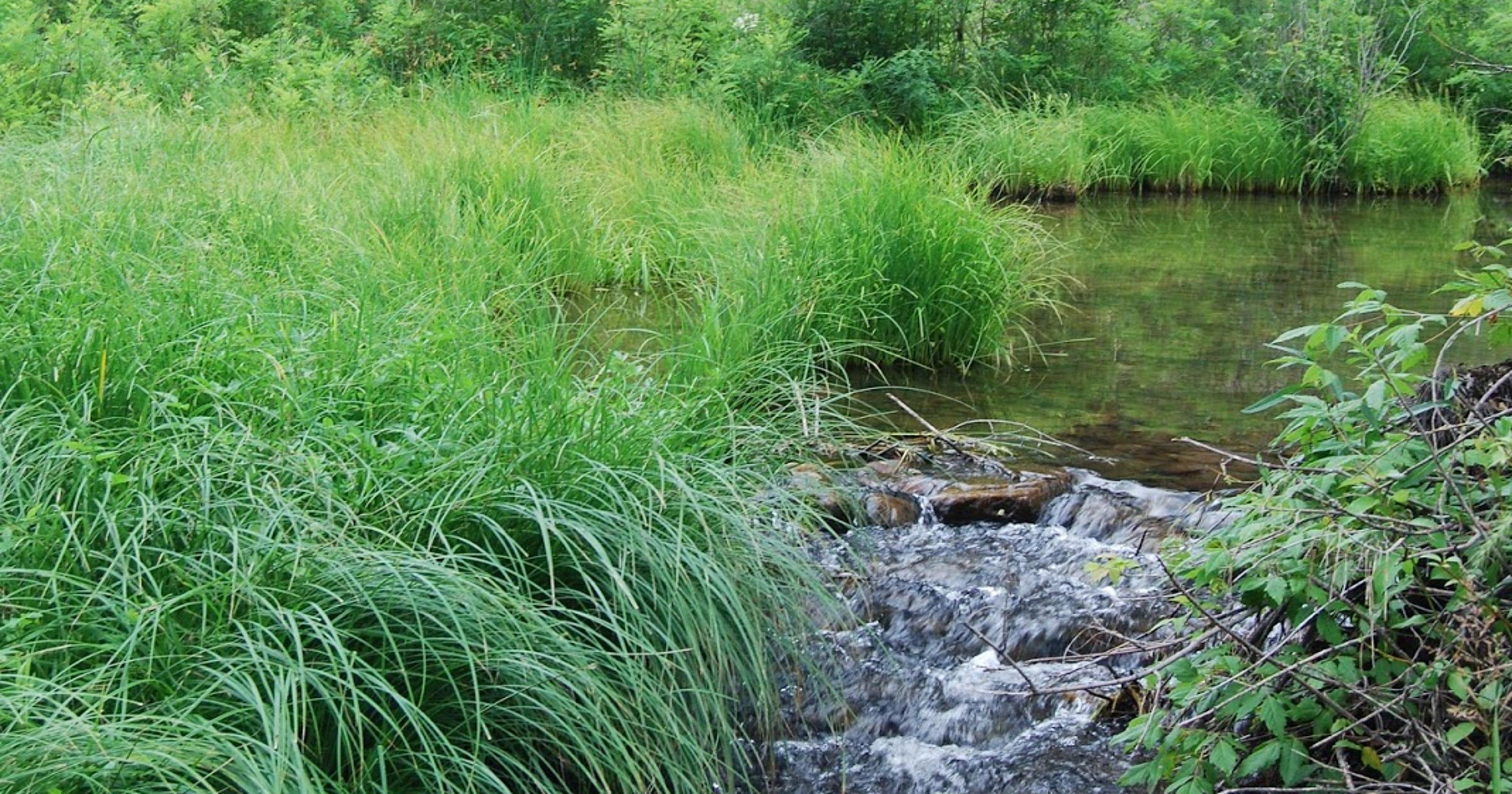 Splashy hike explores East Clear Creek