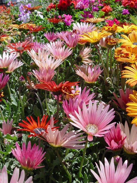 Bright flowers that work in coachella valley gardens mightylinksfo